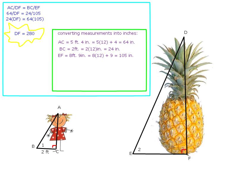 Right Triangles in The World Describe The Right Triangle